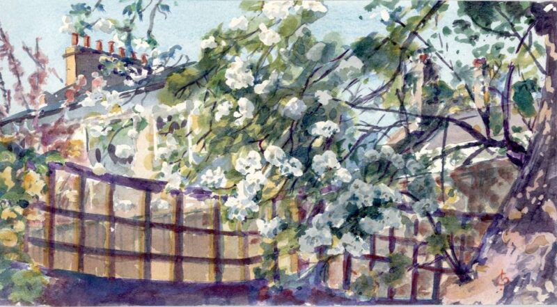 April Pear Blossom